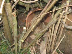 Abris pour hérissons dans un pot en terre sous un tas de branches.