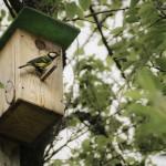 Birdhouse with bird