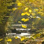 Ruisseau du Portefeuille.