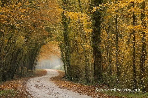 Chemin forestier en automne.