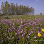 Prairie fleurie.